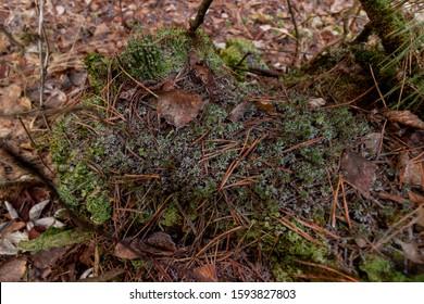 moss on a fallen tree