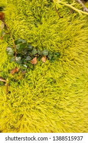 Moss on a forest floor.  St. Mary's River State Park, Leonardtown, MD, USA.