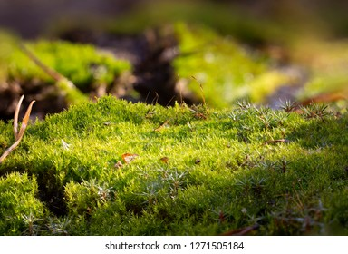 Moss on the forest ground macro close up background