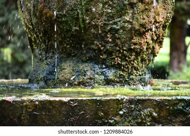 The moss on the fountain