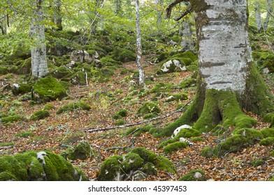 moss on the jungle irati, Spain