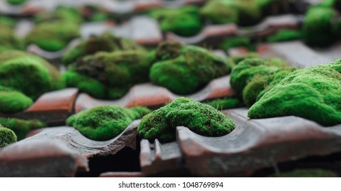 moss on the old roof