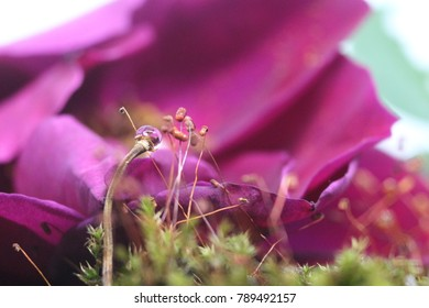 Moss on a red moist brick , There are drops on the tip and pink rose petals. Happy valentine's day