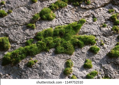 moss on a rock face