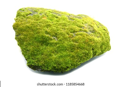 Moss on rock on white background.