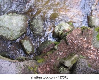 moss on rocks by water
