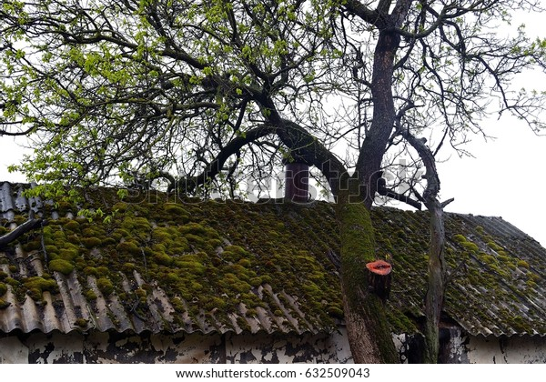 Moss on the roof. Photo taken on: April 23 Sunday, 2017