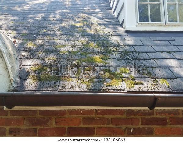 moss on roof shingles