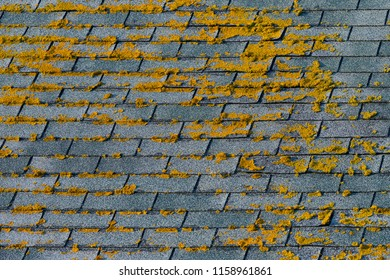 Moss on roof shingles forms pattern