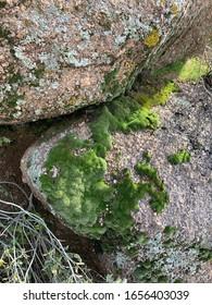 Moss on a shady mountain rock in the Arizona desert