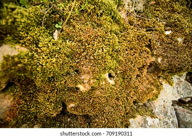 Moss on a stone on a bright sunny day