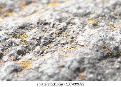 Moss on a stone, like gold dust - Close up macro