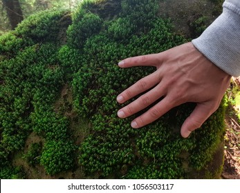 Moss on stone in the woods, the hand touches the moss, hand and moss