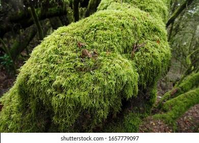 Moss Images Stock Photos Vectors Shutterstock