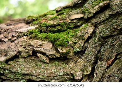 moss on tree trunk background