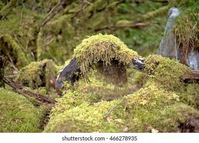 Moss on tree trunk in Juneau Alaska