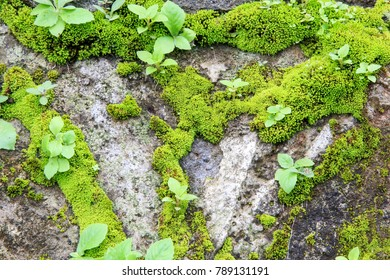 Moss on walls and stones