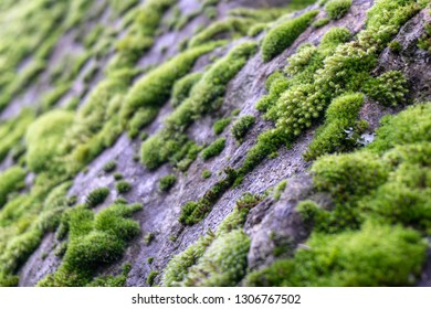 Moss on the wet rock