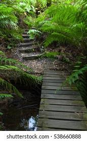 Moss on wooden bridge in rain forest Blue Mountains Australia
