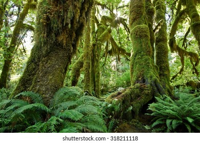 moss at rain forest in Olympic NP