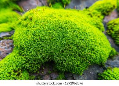Moss in a rock