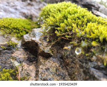 moss and rock, water fall
