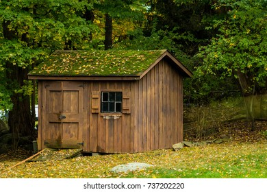 Moss roof on shed in the fall