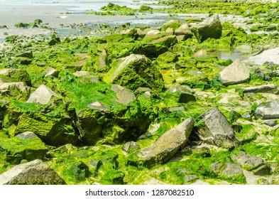 Moss season on the Con Lon island