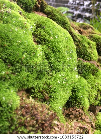 Moss is a small, soft plant about 1-10 cm (0.4-4 inches) tall, but may have a much larger size. Usually grow in trees or wet areas under shade trees. No flowers and seeds In general, the leaves covere