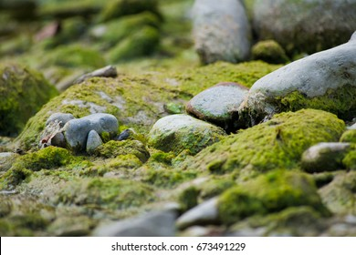 Moss and Stones close to a River in Italy with leaves and branches, close to gray rocks and green plants