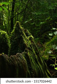 moss stump mountain in yakushima
