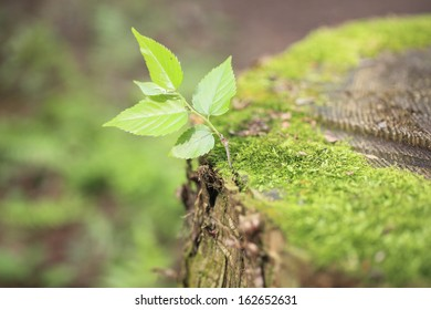 The moss of a stump, and the sprout of a zelkova