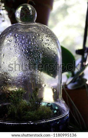 Moss Terrarium Water Droplets Stock Photo Edit Now 1180995136