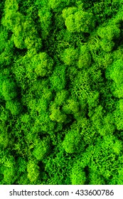 Moss. The texture of the moss