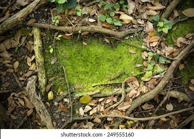Moss Texture Background