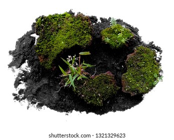 Moss texture bakground. Green moss on white background. Green moss with dirt or soil isolated on white background
