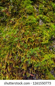 Moss texture on tree bark