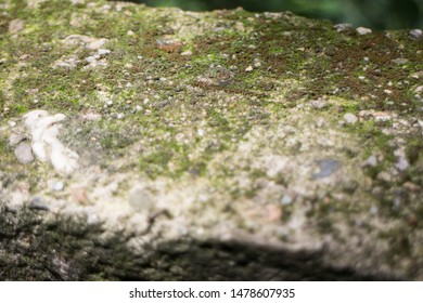Moss textures background. Green dark mos on Stone background.