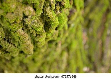 Moss is in tree