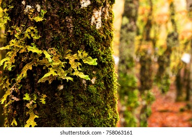 moss trunk forest background space for your text