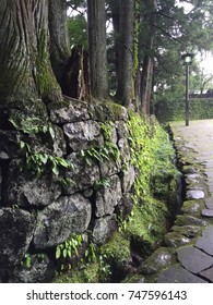 The moss is a very small, green or yellowplant that grows especially in wet earth or on rocks, walls, and tree trunks