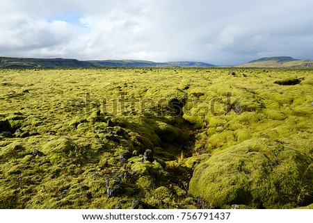 Moss-covered lava field near Skaftafell