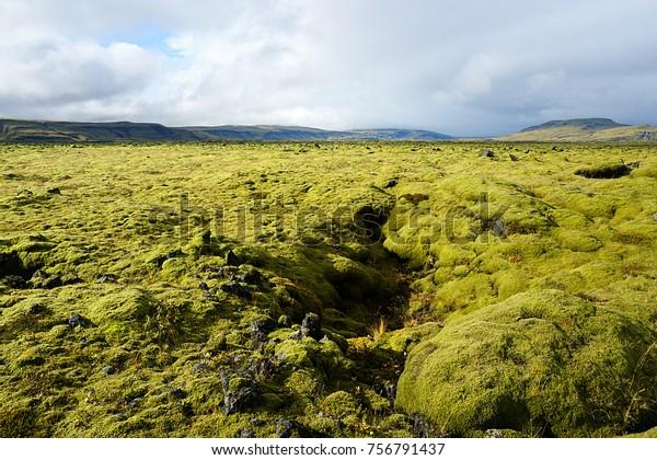 Moss-covered lava field near Skaftafell