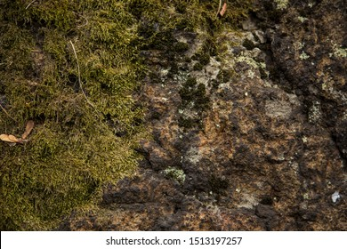 Moss-covered stone. Beautiful moss and lichen covered stone. Bright green moss Background textured in nature.