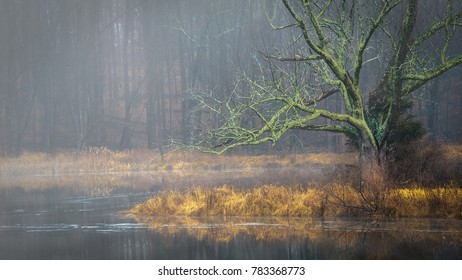 Moss-covered tree at the pond on a cold, foggy winter's day