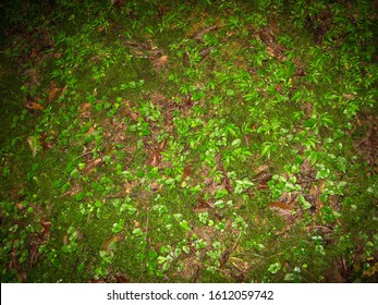 Mosses and buds of the tree in the forest floor. Forest floor. Close up of  Jungle floor.
