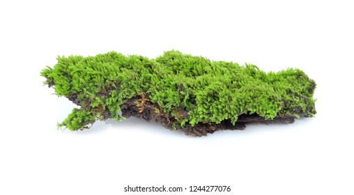 mosses isolated on white background