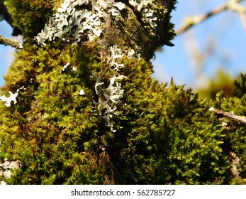 Mosses and Lichens on a rare sunny afternoon in a Pacific Northwest rain forest