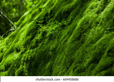 Mosses on a slope