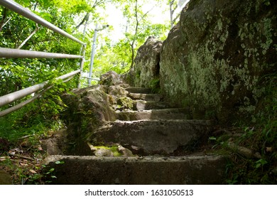 Moss-grown stone steps and forest